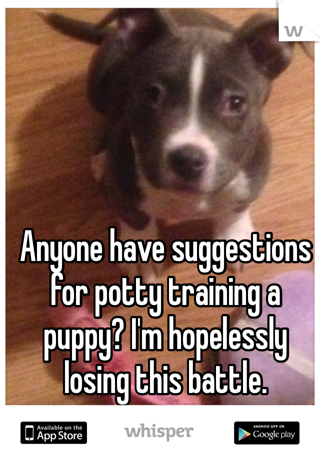 Anyone have suggestions for potty training a puppy? I'm hopelessly losing this battle.