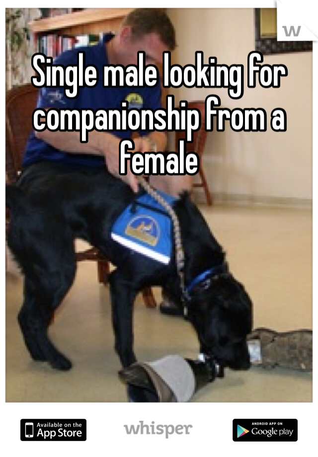Single male looking for companionship from a female