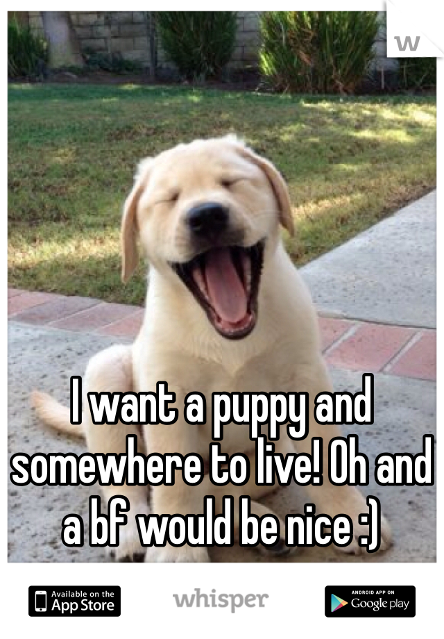 I want a puppy and somewhere to live! Oh and a bf would be nice :)