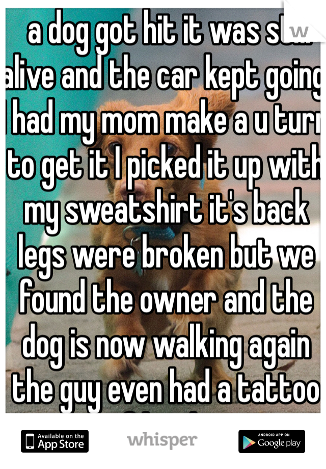 a dog got hit it was still alive and the car kept going I had my mom make a u turn to get it I picked it up with my sweatshirt it's back legs were broken but we found the owner and the dog is now walking again the guy even had a tattoo of his dog