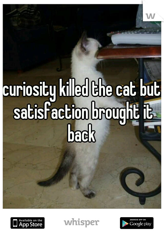 curiosity killed the cat but satisfaction brought it back