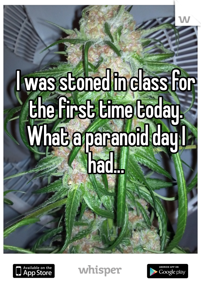 I was stoned in class for the first time today. What a paranoid day I had...