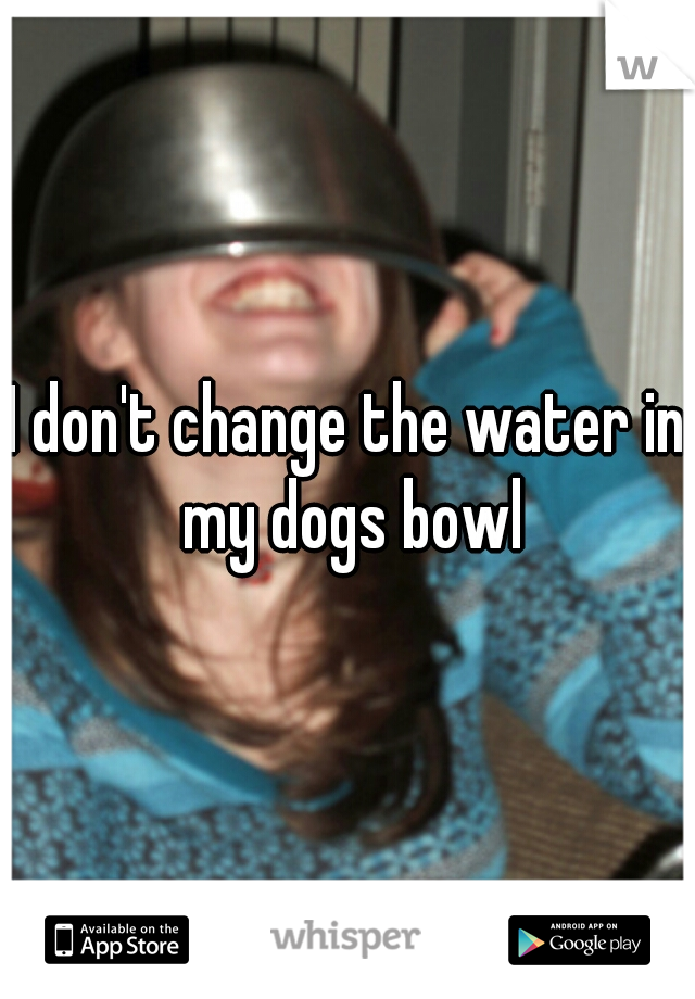 I don't change the water in my dogs bowl