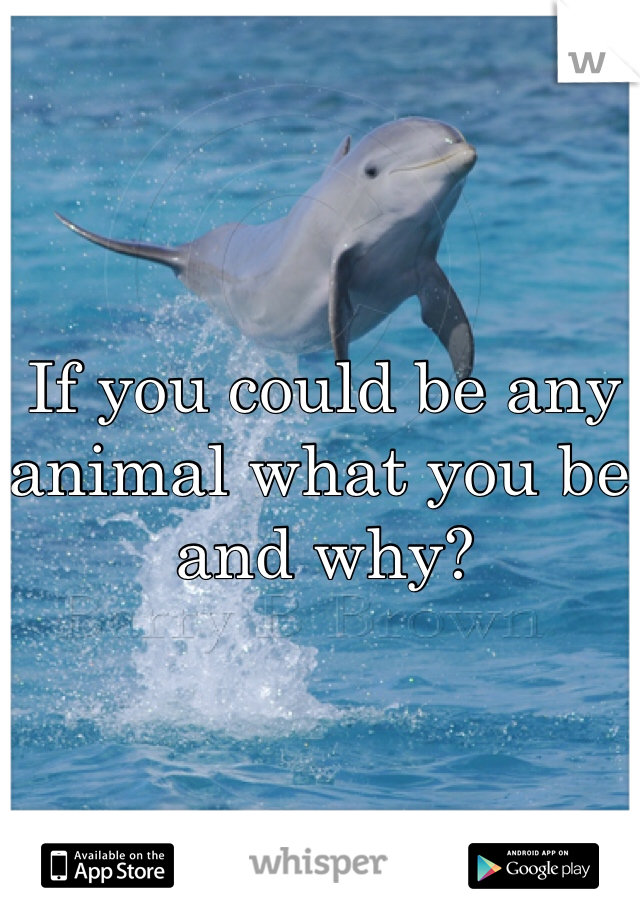 If you could be any animal what you be and why?