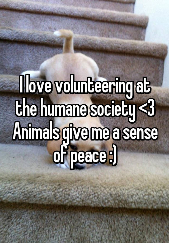 I love volunteering at the humane society <3 Animals give me a sense of peace :)