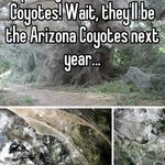 Hopefully for the Phoenix Coyotes! Wait, they'll be the Arizona Coyotes next year...