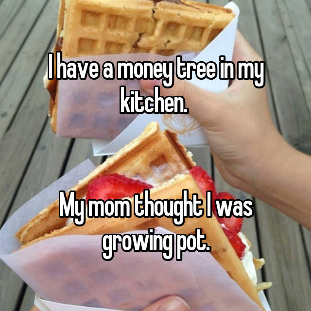 I have a money tree in my kitchen.    My mom thought I was growing pot.