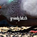 greedy bitch