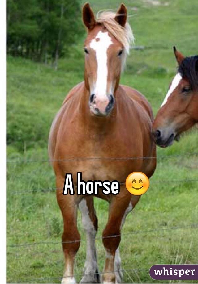 A horse 😊