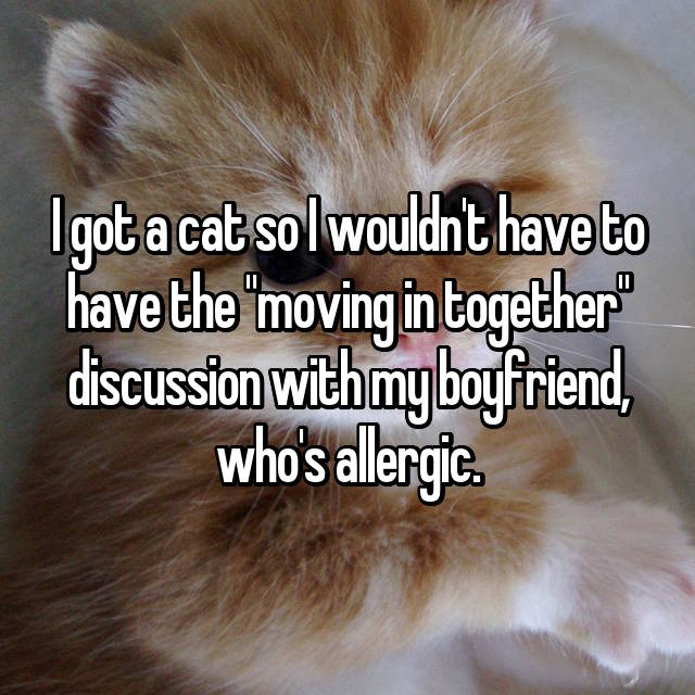 """I got a cat so I wouldn't have to have the """"moving in together"""" discussion with my boyfriend, who's allergic."""