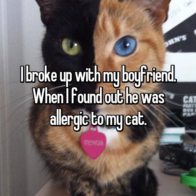 I broke up with my boyfriend. When I found out he was allergic to my cat.