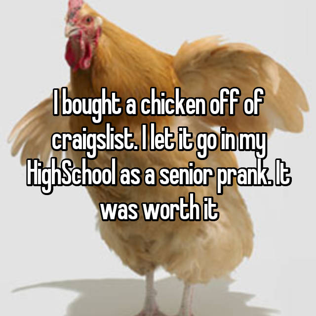 I bought a chicken off of craigslist. I let it go in my HighSchool as a senior prank. It was worth it