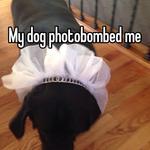My dog photobombed me
