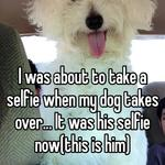 I was about to take a selfie when my dog takes over... It was his selfie now(this is him)
