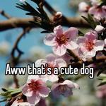 Aww that's a cute dog