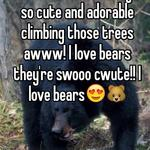 Aww the bears!!! They're so cute and adorable climbing those trees awww! I love bears they're swooo cwute!! I love bears😍🐻