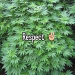 Respect ✌️