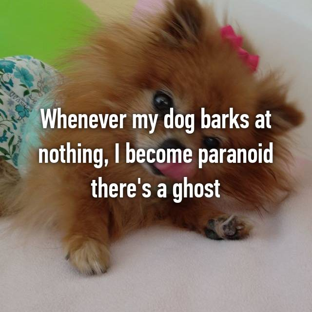 Whenever my dog barks at nothing, I become paranoid there's a ghost