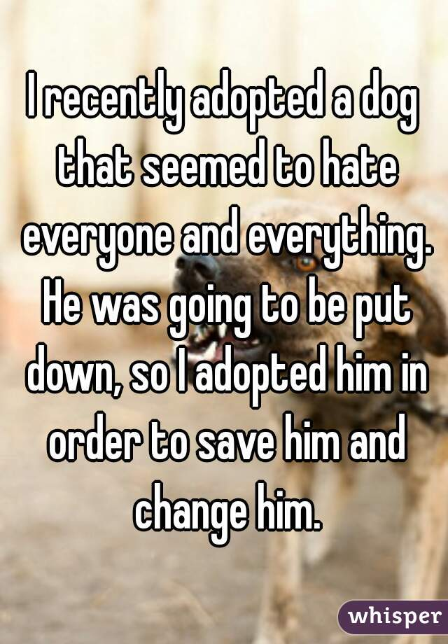 I recently adopted a dog that seemed to hate everyone and everything. He</p><p>was going to be put down, so I adopted him in order to save him and change</p><p>him.