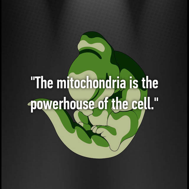 """""""The mitochondria is the powerhouse of the cell."""""""