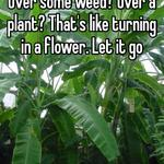 Over some weed? Over a plant? That's like turning in a flower. Let it go