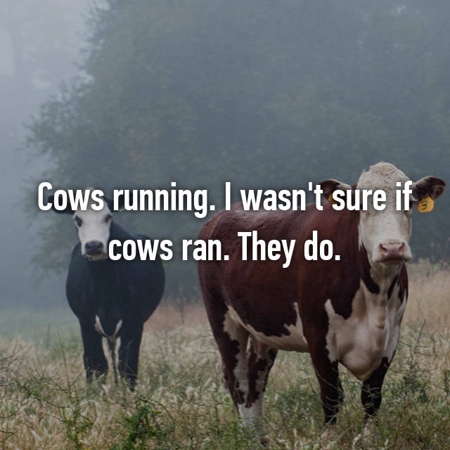 Cows running. I wasn't sure if cows ran. They do.