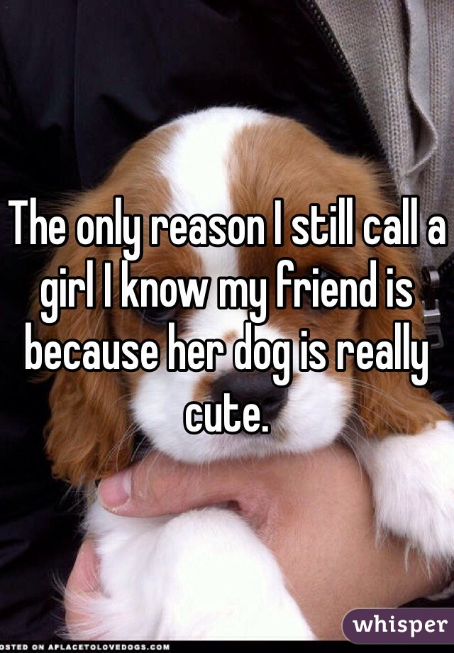 The only reason I still call a girl I know my friend is because her dog is really cute.