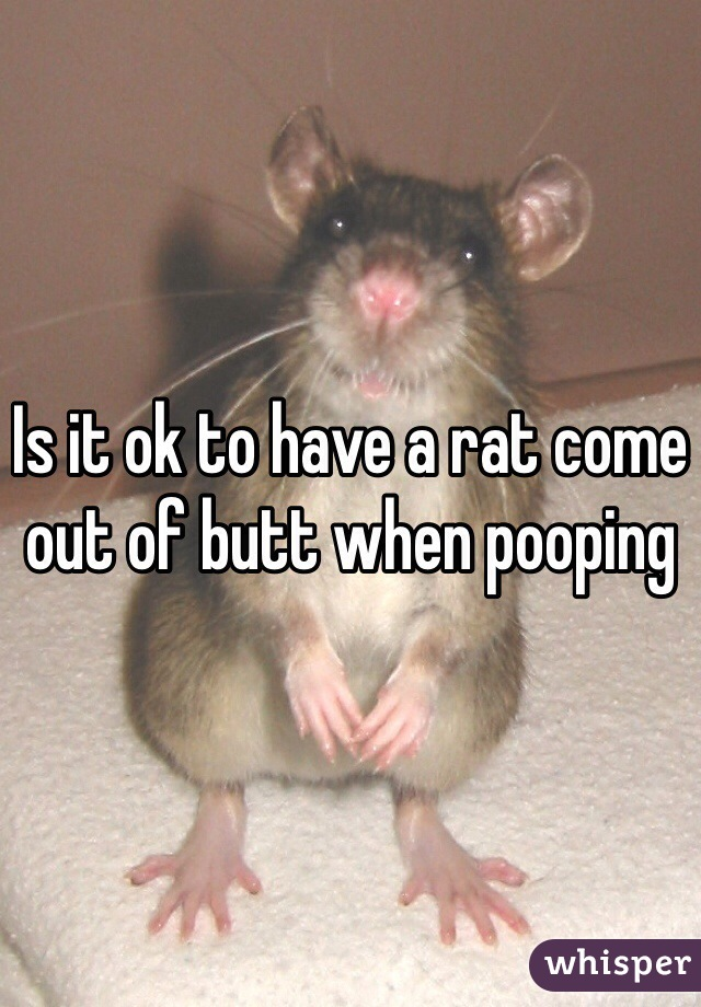 Is it ok to have a rat come out of butt when pooping