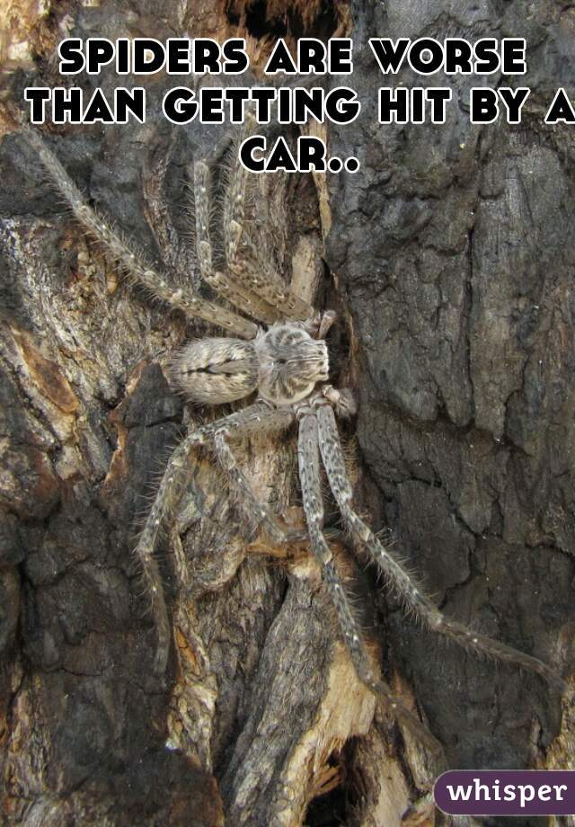 spiders are worse than getting hit by a car..