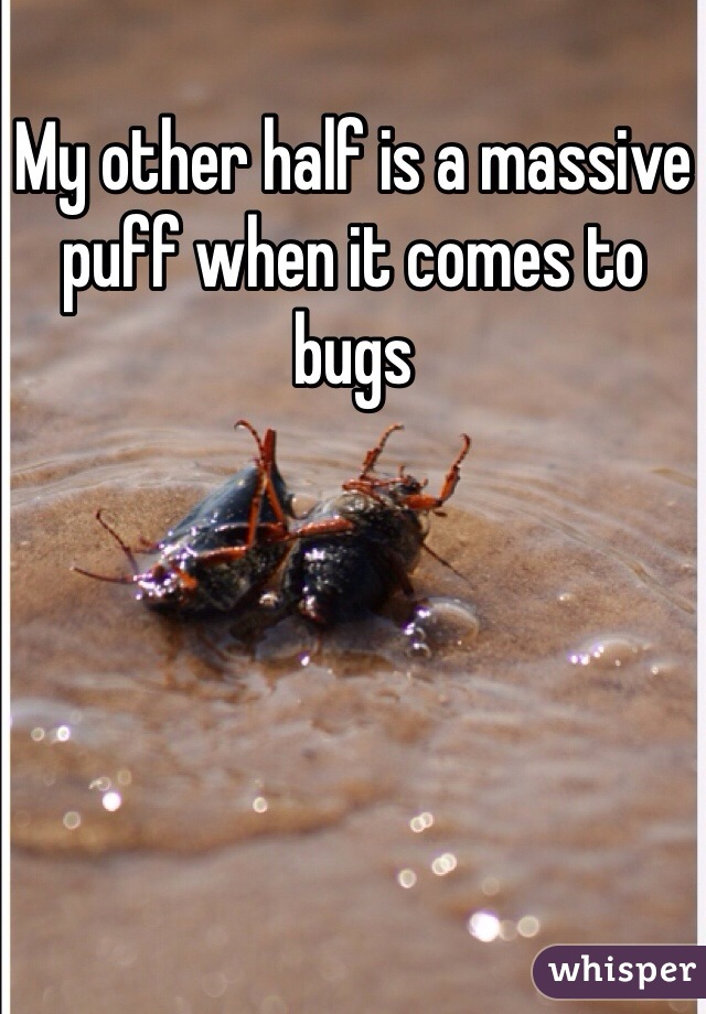 My other half is a massive puff when it comes to bugs