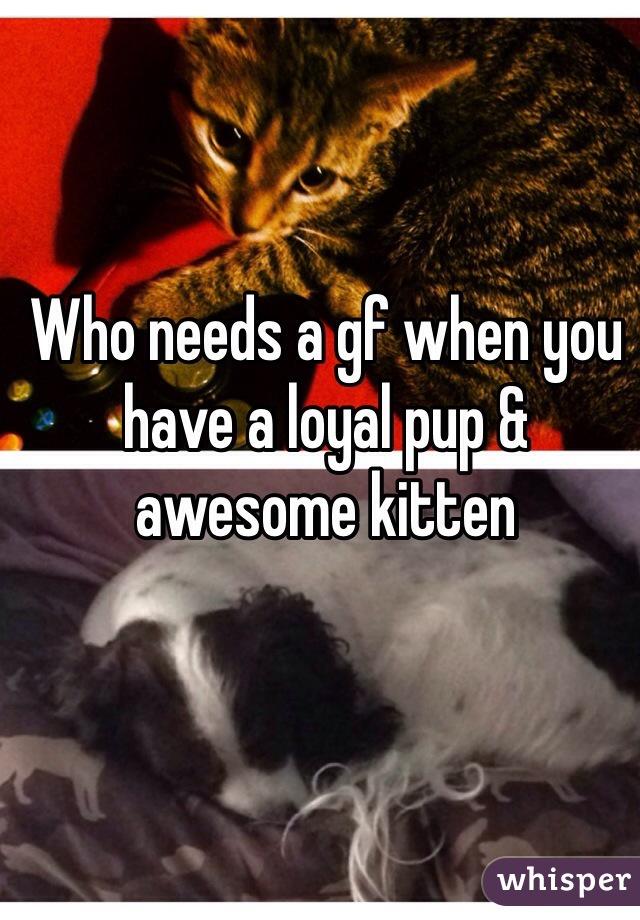 Who needs a gf when you have a loyal pup & awesome kitten