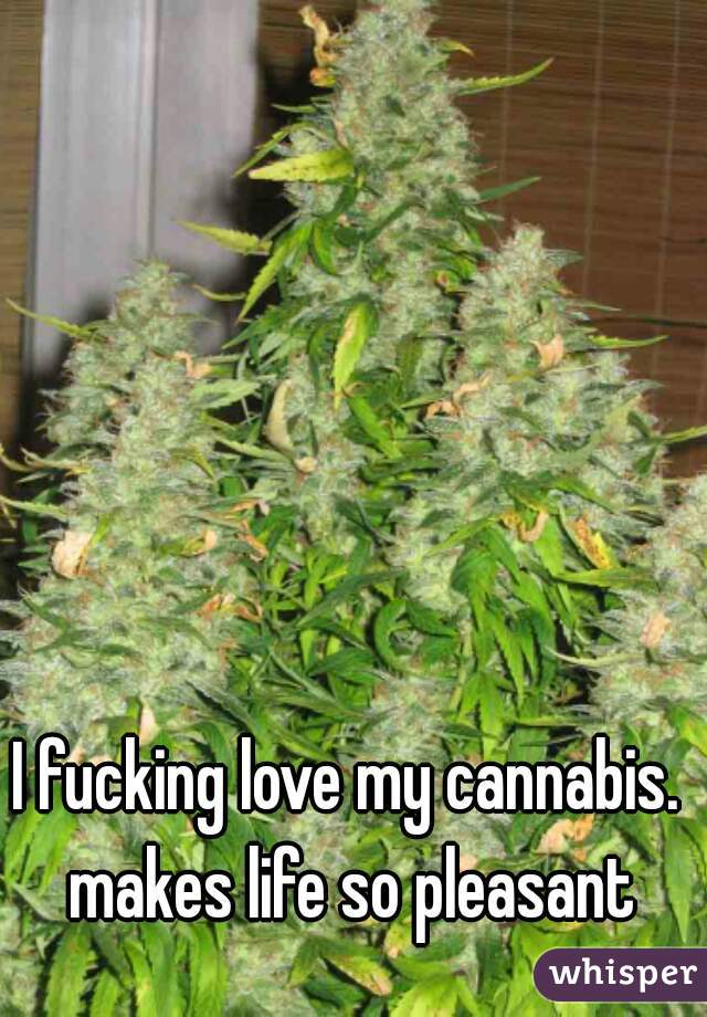 I fucking love my cannabis. makes life so pleasant