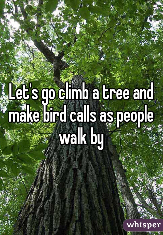 Let's go climb a tree and make bird calls as people walk by