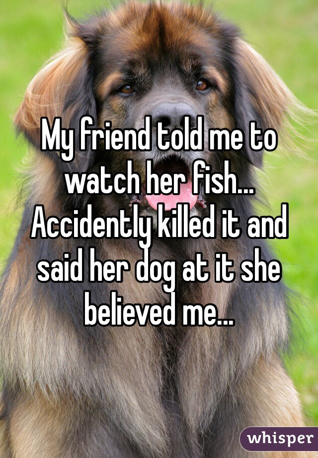 My friend told me to watch her fish... Accidently killed it and said her dog at it she believed me...