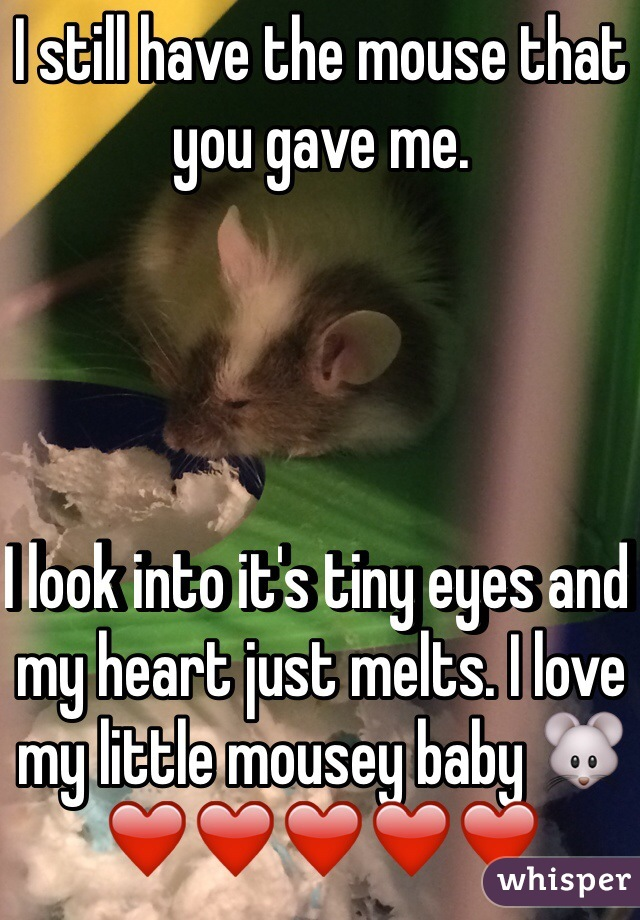 I still have the mouse that you gave me.      I look into it's tiny eyes and my heart just melts. I love my little mousey baby 🐭❤️❤️❤️❤️❤️