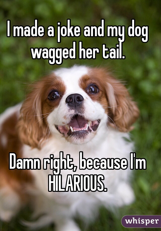 I made a joke and my dog wagged her tail.     Damn right, because I'm HILARIOUS.