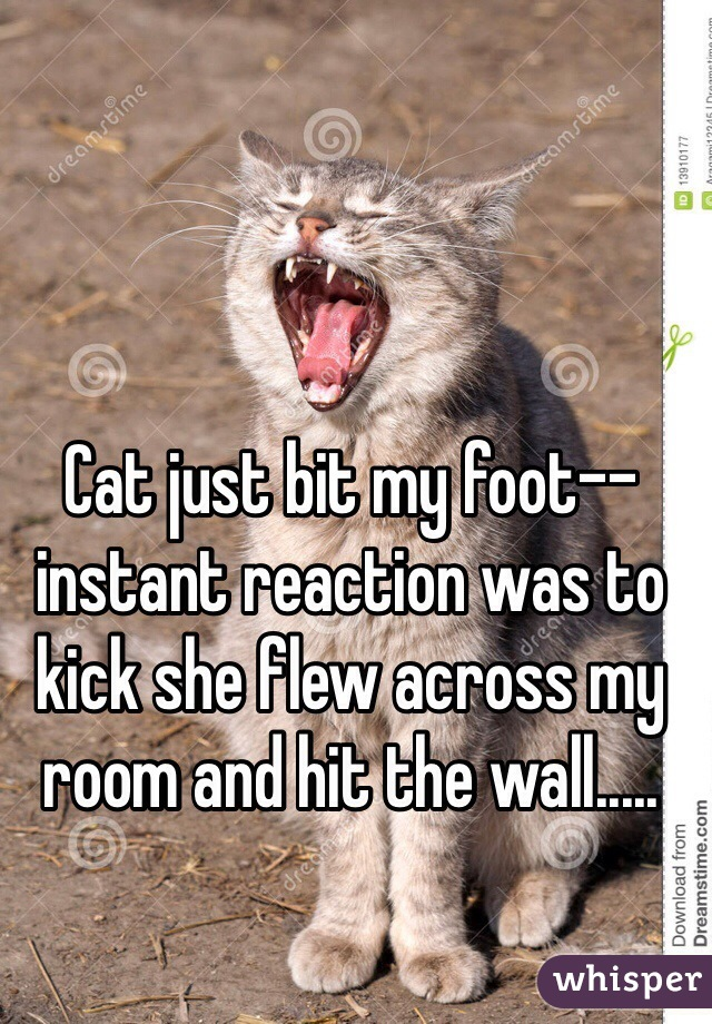 Cat just bit my foot-- instant reaction was to kick she flew across my room and hit the wall.....