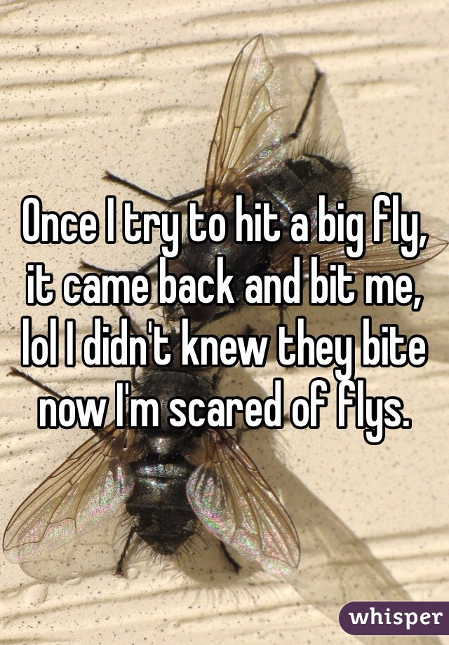 Once I try to hit a big fly, it came back and bit me, lol I didn't knew they bite now I'm scared of flys.