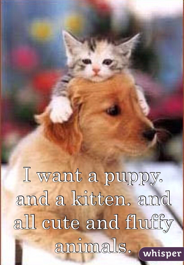 I want a puppy. and a kitten. and all cute and fluffy animals.
