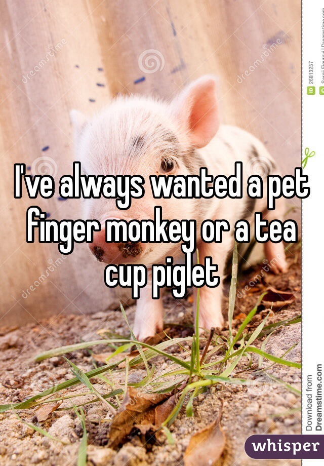 I've always wanted a pet finger monkey or a tea cup piglet