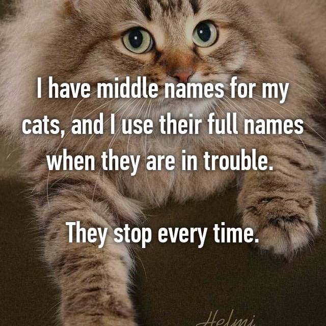 I have middle names for my cats, and I use their full names when they are in trouble.   They stop every time.