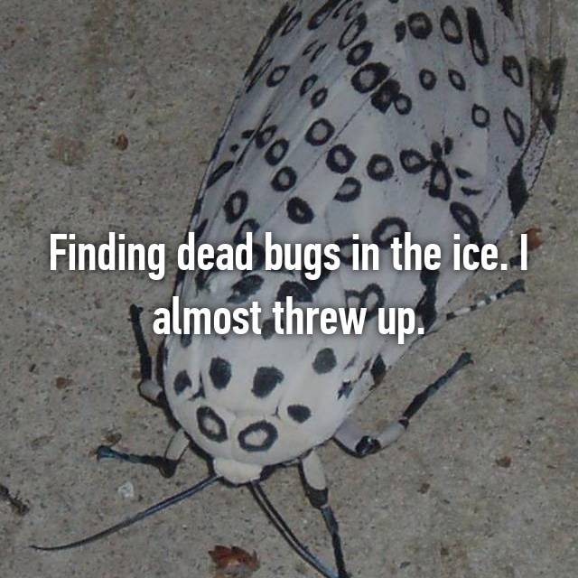Finding dead bugs in the ice. I almost threw up.