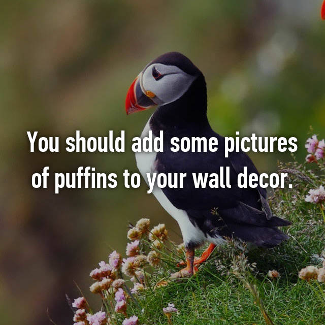 You should add some pictures of puffins to your wall decor.