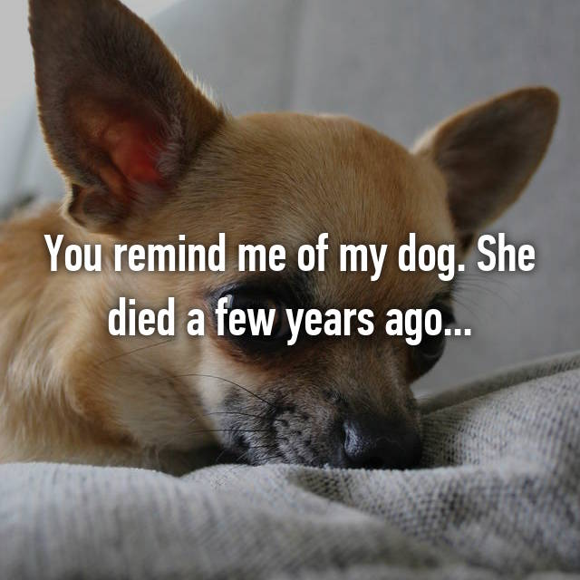 You remind me of my dog. She died a few years ago...