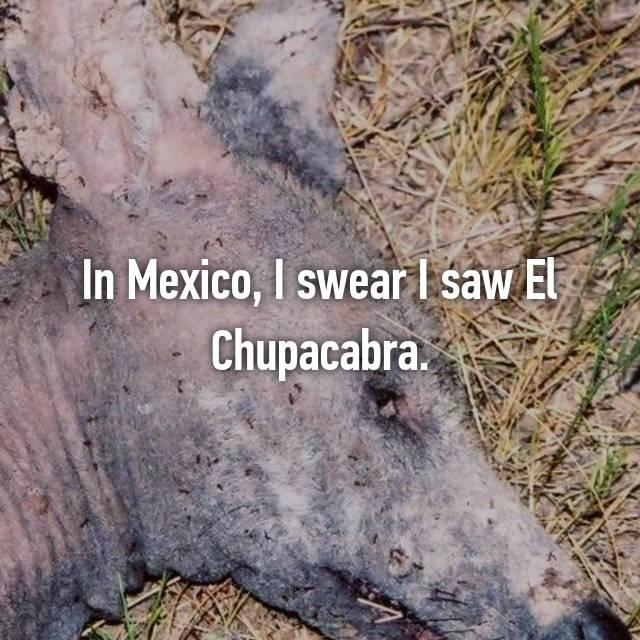 In Mexico, I swear I saw El Chupacabra.