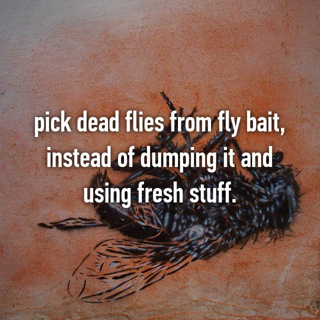 pick dead flies from fly bait, instead of dumping it and using fresh stuff.