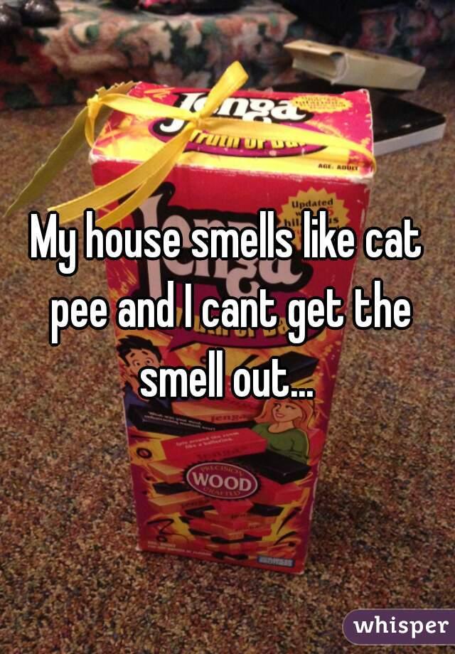 best cat care plan