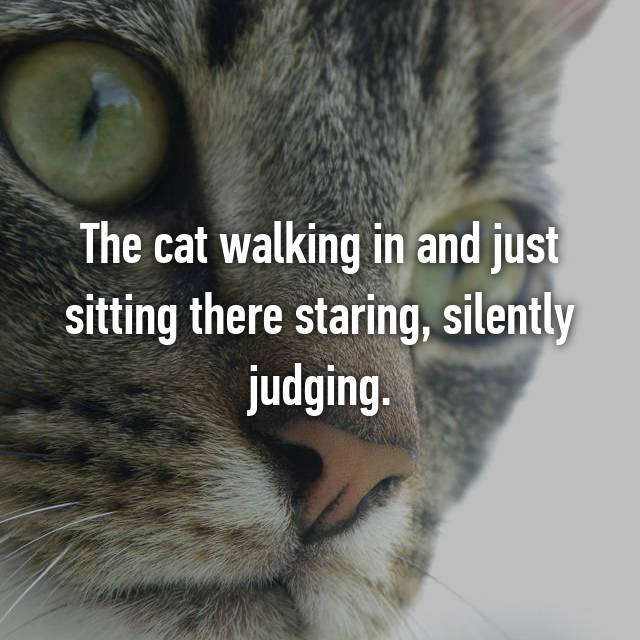 The cat walking in and just sitting there staring, silently judging.