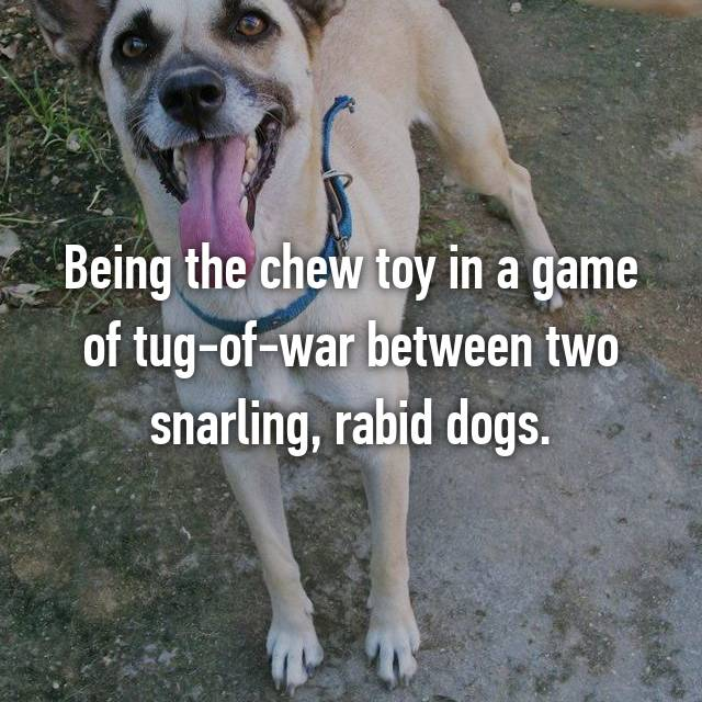 Being the chew toy in a game of tug-of-war between two snarling, rabid dogs.