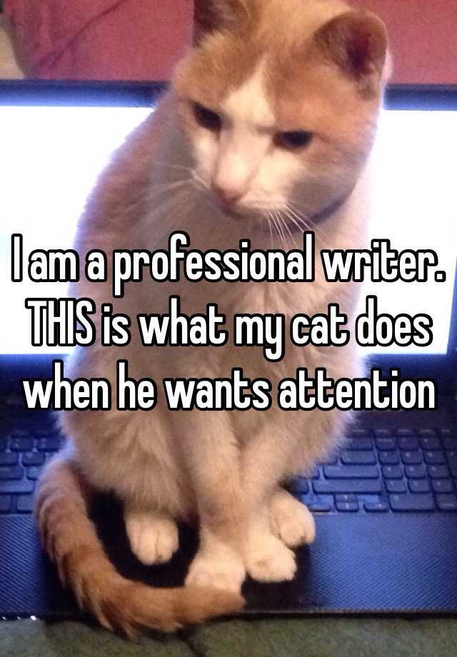 I am a professional writer.  THIS is what my cat does when he wants attention